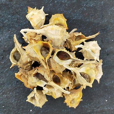 🇫🇷 ESCARGOT DE MER (Poivres) cuits aux thym bio (barquette)