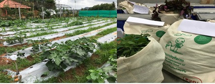 Organic fresh produce from Community farm sold to customers