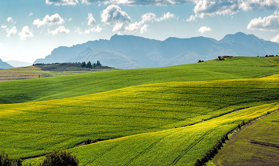 agriculture-countryside-crop-cropland-25