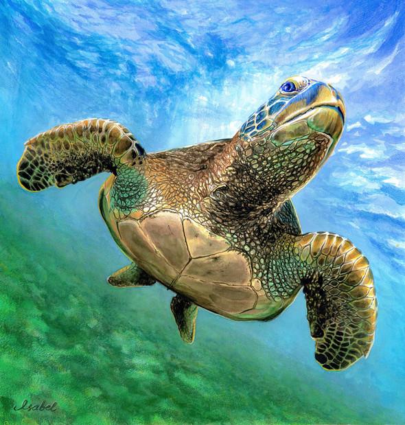 Sea turtle: Non-plastic Ocean | Watercolor