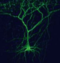 neurona_edited.jpg