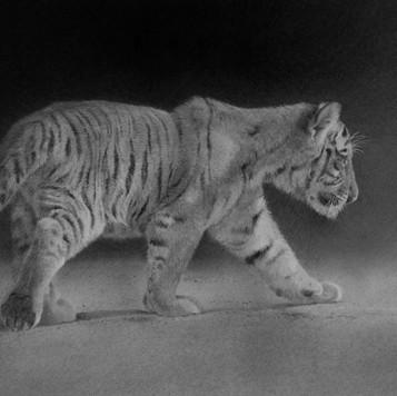 Tiger Cub II