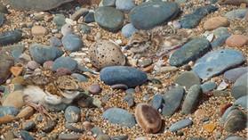 Amongst the Pebbles