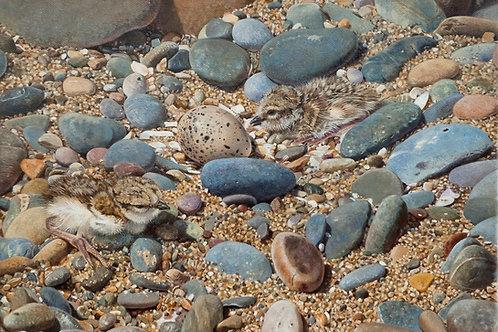 'Amongst the Pebbles'