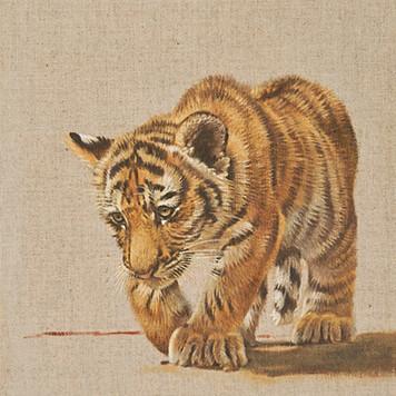 Amur Cub Ⅲ