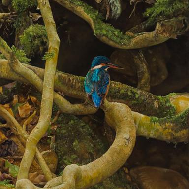 Autumn Kingfisher