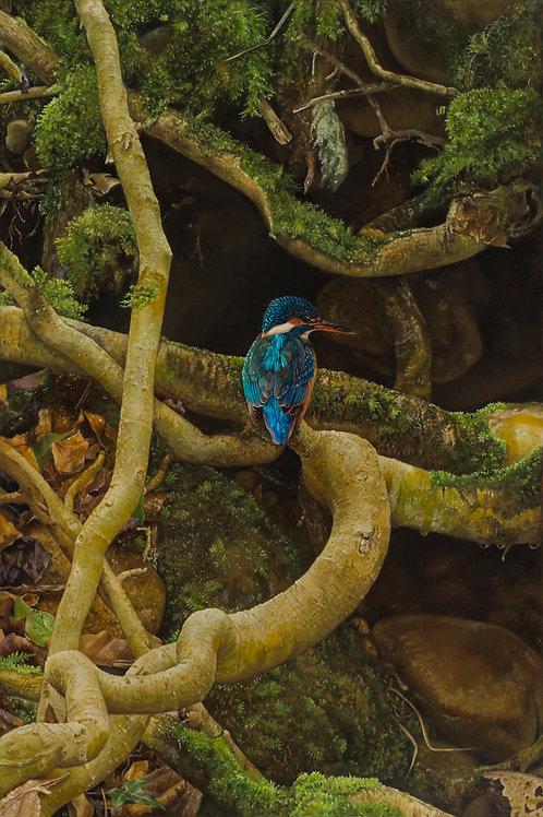 'Autumn Kingfisher'