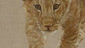 Lion Cub V
