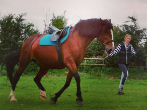 Building Your Horses' Fitness
