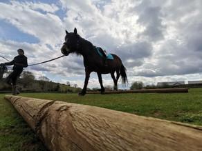 Creating An Equestrian Exercise Plan