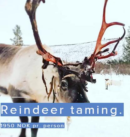 Reindeer taming
