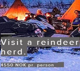 Visit a reindeer herd