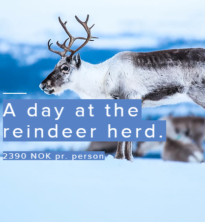 Daytrip to reindeer herd