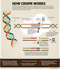 g-CRISPR_web-768x878.jpg