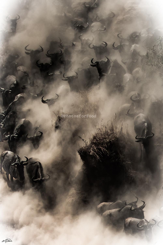 Great migration of Wildebeest Gnus in Tanzania, East Africa
