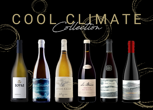 cool climate wine south africa