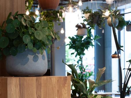 Pravidelná péče o rostliny ve Spojce Karlín