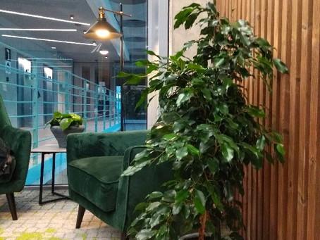 Realizace pokojových rostlin v kancelářích Praga studios
