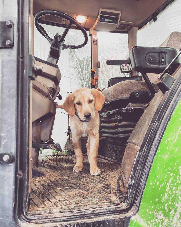puppy in a tractor
