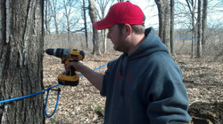 drilling a maple tap