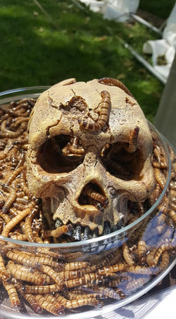 Dégustation insectes, fakir linja
