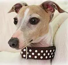 Safety - Martingale Collars | Richardson, TX | TX Italian Greyhound Rescue Inc.