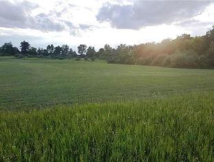 Wide Open Field | Land For Sale