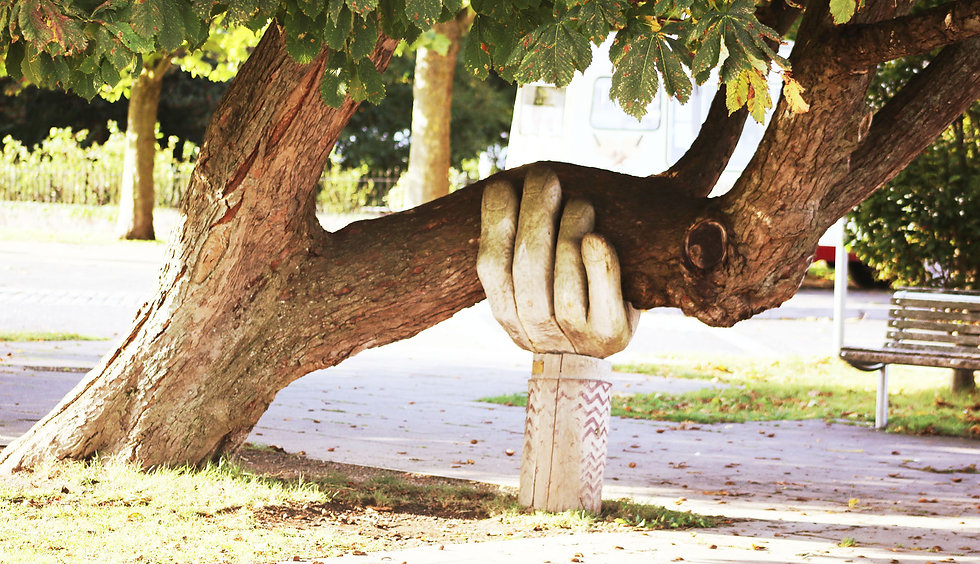 HAND HOLDING TREE UP.jpg