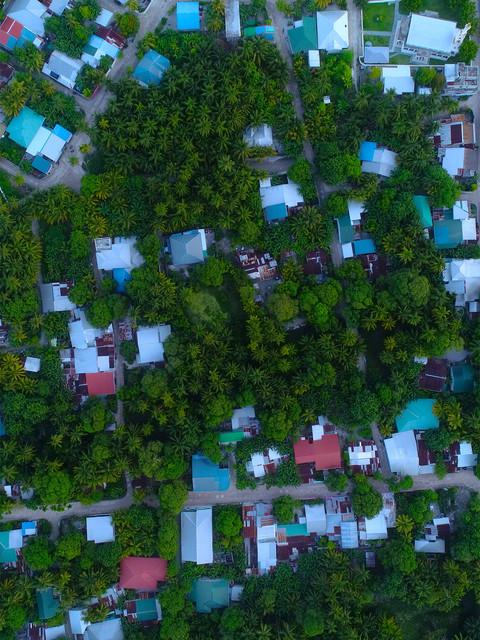 neighborood with lots of trees.jpg