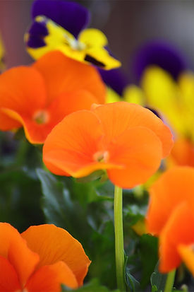 orange and purple flowers.jpg