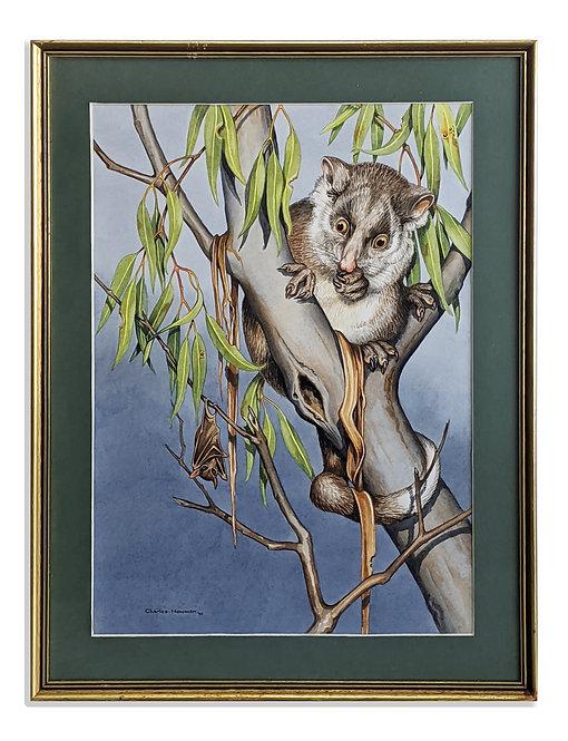"""Ring-tailed Possum & Flying Fox"" (1992)"