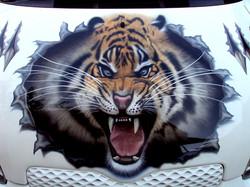 Angry Tiger bonnet art