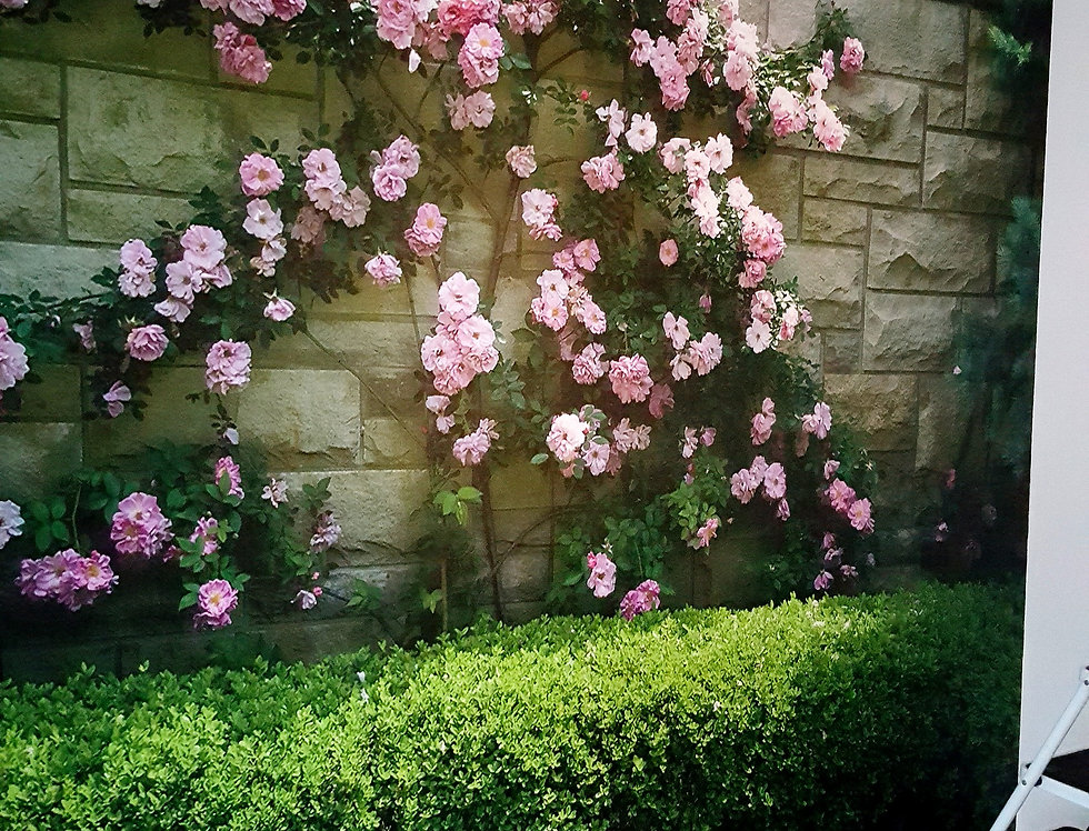Wall-Graphics-Roses