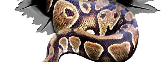 Snake-Torn-1-Sticker