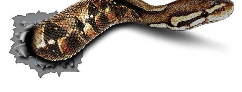 Snake-Stitch-Sticker