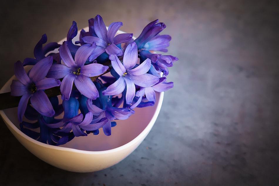 hyacinths-1403653_1920.jpeg