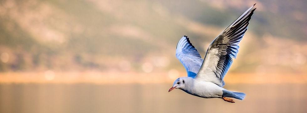 flying-bird_edited_edited_edited_edited_