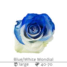Blue+White+Mondial.jpg