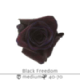 Black+Freedom.jpg