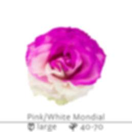 Pink+White+Mondial.jpg