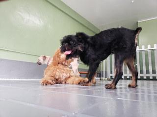 paws gurus dog daycare fun nyc