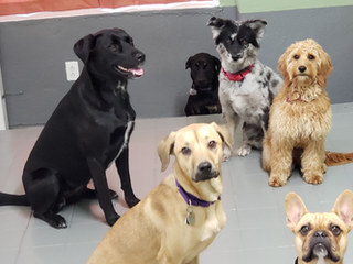 the dog daycare experience