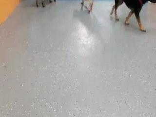 harlem best dog daycare