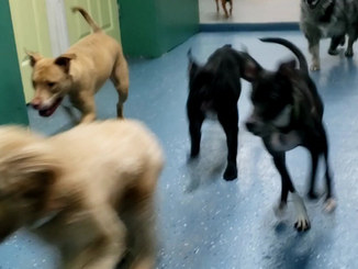 Fetching pups at daycare