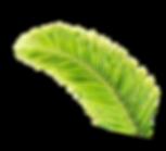 brut-rose-plant.png