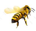 abeja-blanc-noir-izquierda.png