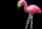 cabernet-sauvignon-flamingo-02.png