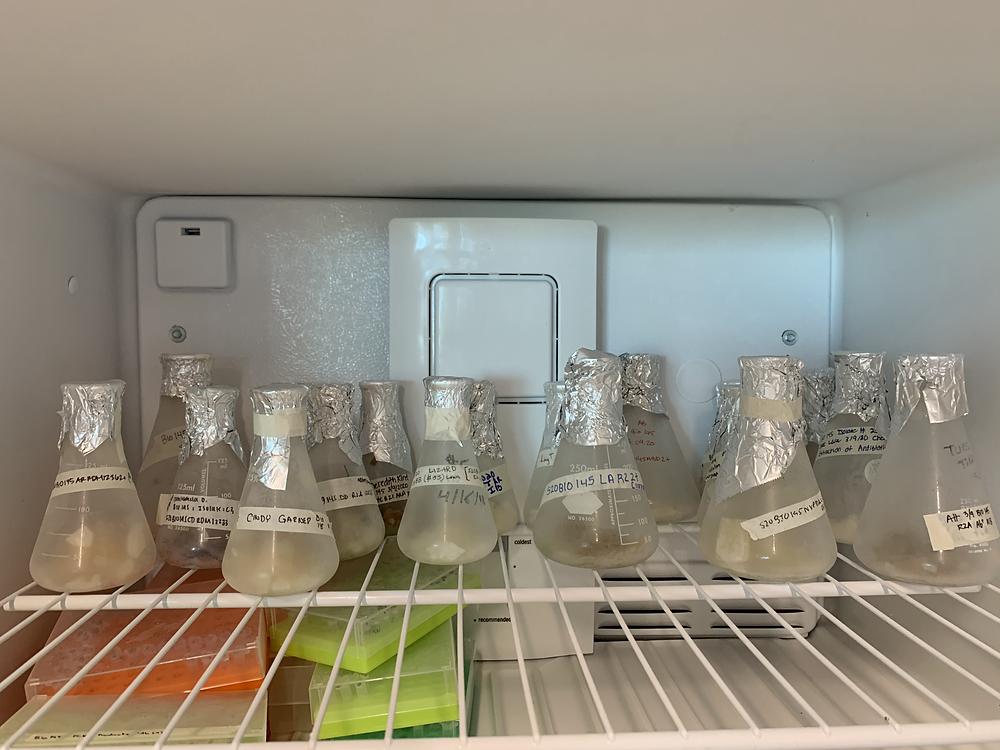 Glass flasks in -20C freezer