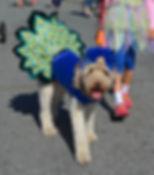 dogpeacock.jpg
