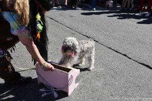 Best-Pet-Trick-Fiona_Chuck-Pitkovsky-300